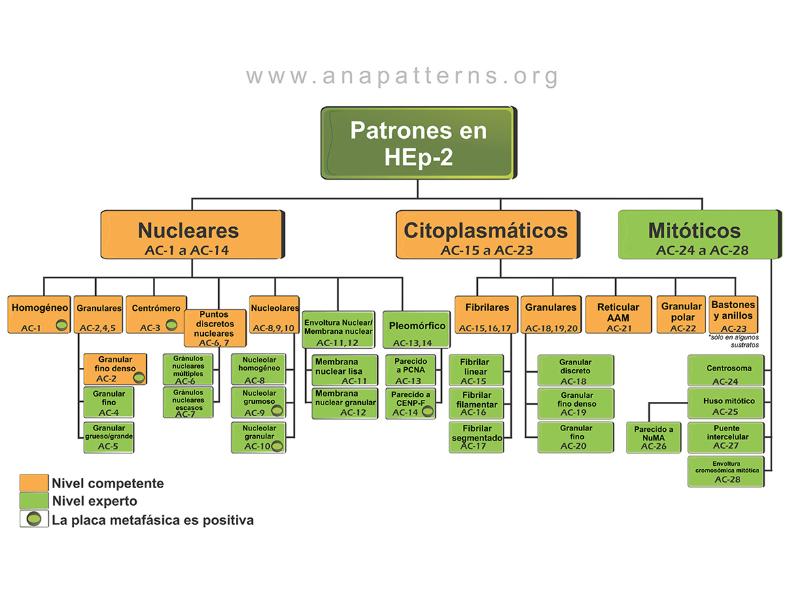 Patrones de ANA (anticuerpos antinucleares)